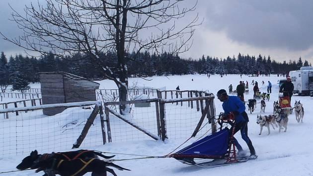 PADESÁT musherů svedlo o víkendu na Lesné nelítostné boje o Zimní pohár.