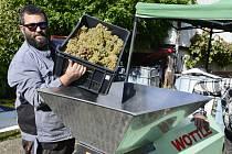 Voňavější, sladší a nevejde se do sklepa, chválí úrodu vinaři z Března.