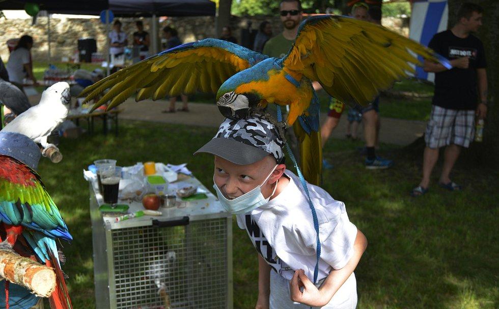 Charitativní akci v parku v Jirkově navštívilo spousta návštěvníků. Na závěr se uskutečnil běh.