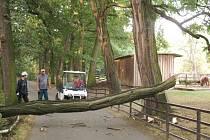Větev, která zatarasila cestu, pracovníci zooparku rozřezali a odvezli.