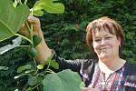 Irena Kobzová pěstuje díky na své zahradě v Polákách.
