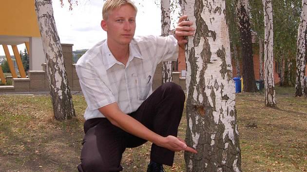 Do jedné z těchto bříz někdo nalil chemikálii. Strom zanedlouho uhyne.