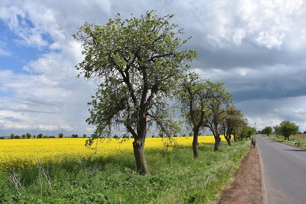 Cestou z Března na Kopeček, který je jednou z jeho osad. Vyhledávaná je cyklisty.