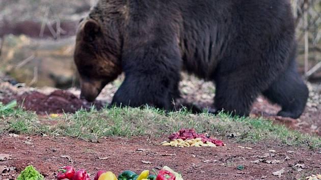 Buzení medvědů v chomutovském zooparku