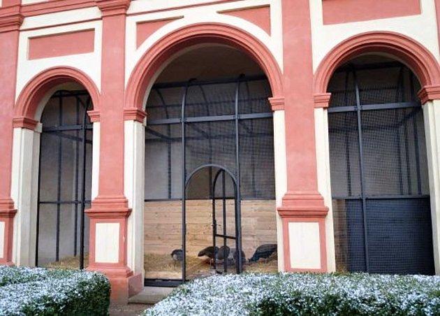 Klášterečtí pávi bydlí na zámku vnovém