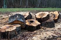Pokácené stromy v Bezručově údolí