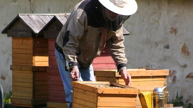 Klášterní včely každý týden kontroluje a obstarává kadaňský včelař Jiří Louda.