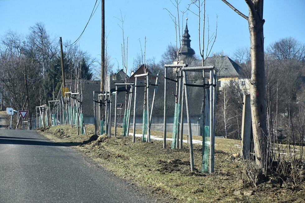Příjezd do Blatna a okolní cesty lemují stovky nově vysazených stromů.