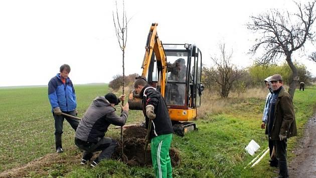 U příjezdové cesty od Chomutova do Hrušovan poroste devadesát hrušní. Na jejich výsadbu, v odborné režii zahradnické firmy Studený z Tušimic, přispěla obci Nadace ČEZ.