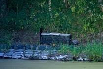 Jedna z odchytových klecí na mývala myslivců v Místě u Chomutova. Na zdejším rybníku opakovaně likviduje vysazené ryby.
