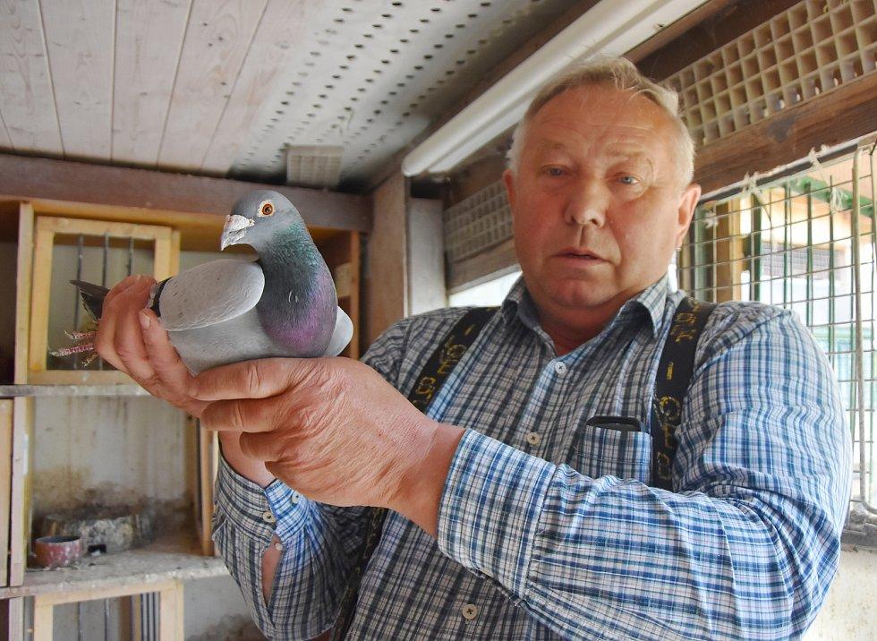 Chovu poštovních holubů a závodům se Zdeněk Hartman věnuje už 47 let.