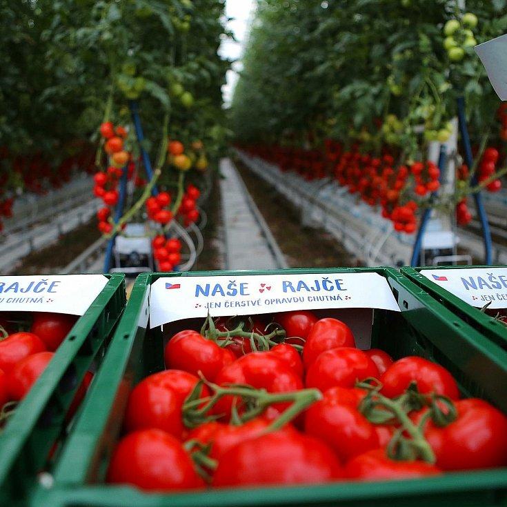 Rajčata jsou pěstovaná přírodní cestou bez pesticidů. Zalévaná jsou filtrovanou dešťovou vodou a opylení ve sklenících obstarávají čmeláci.