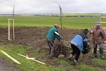 PRACOVNÍCI obce díky nadaci vysázeli několik štíhlých stromků.