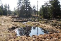 Lesníci obnovují rašeliniště v horách. Jejich práci ukáže vernisáž.