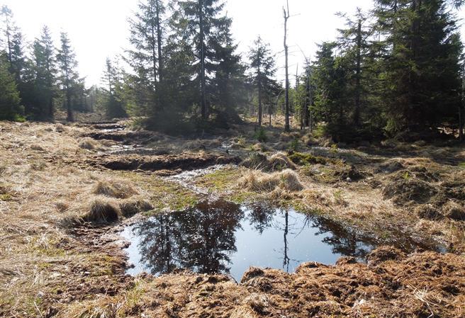 Obnova rašeliniště v horách. Ilustrační foto.