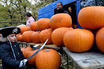 K soutěži o nejhezčí vydlabanou dýni si organizátoři připravili desítky oranžových krasavic.