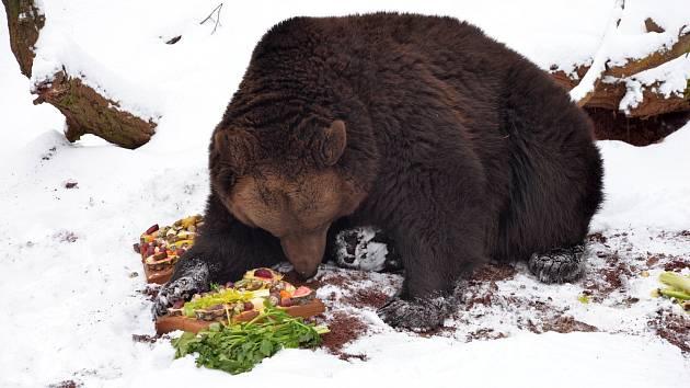 Buzení medvědů v Zooparku Chomutov.