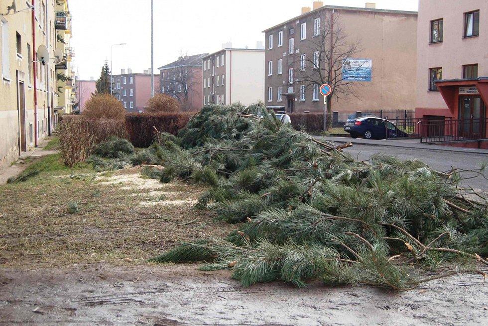 Kácení stromů v Nových Ervěnicích.
