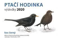 V Česku se sčítali ptáci.