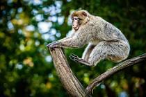 KZ systém je adoptivním rodičem tří zvířat ze zooparku. Makaka Magota.