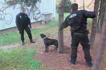Strážníci museli použít odchytovou tyč.