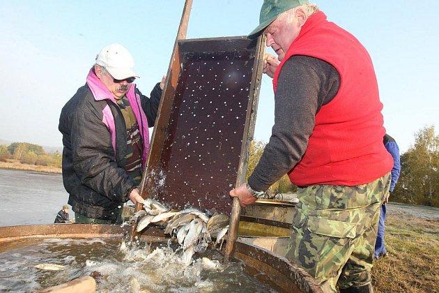 Výlov je rybářský svátek, ale také pořádná dřina.