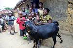 Koza jako dárek pod stromeček - skutečný dárek, který pomáhátěm nejchudším.
