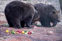 Probouzení medvědů v chomutovském zooparku.