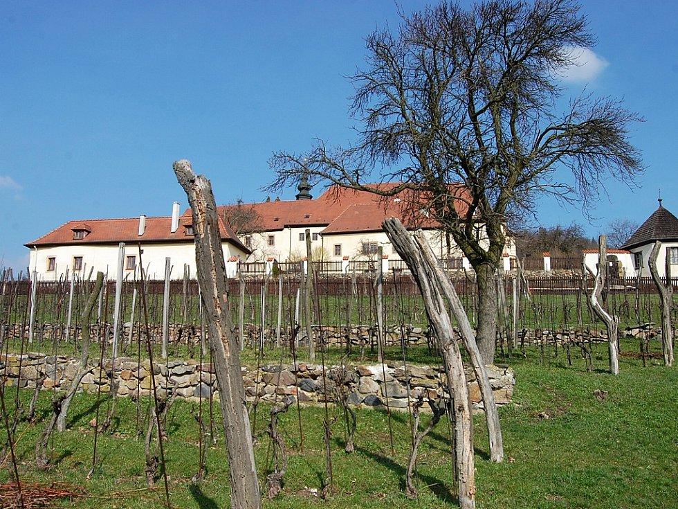 Vinice ve Františkánském klášteře v Kadani