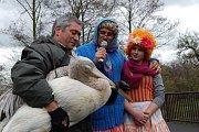 Chovatel Toša Stojanov s mladým pelikánem a moderátory z divadla Mazec.