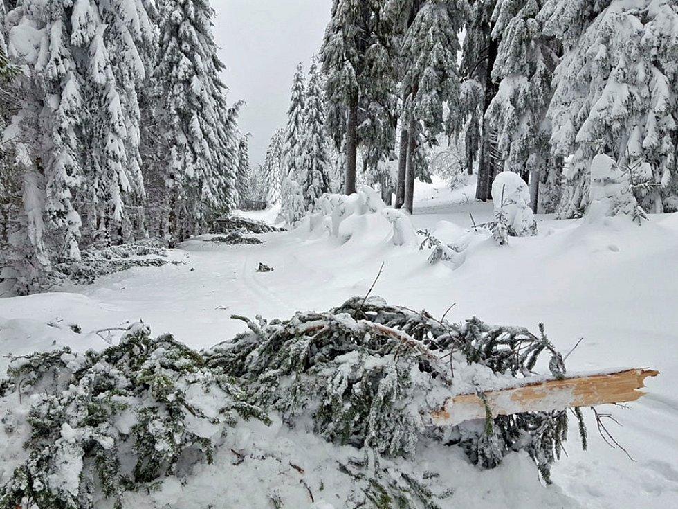 V Krušných horách padají stromy pod tíhou sněhu