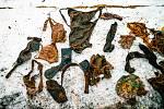 V čapím hnízdě v Zooparku Chomutov našli ošetřovatelé neobvyklou sbírku věcí.