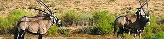 Expedice Central Kalahari