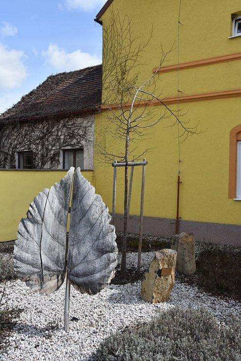Mladá lípa srdčitá, kterou zasadili před obecním úřadem symbolicky v den stého výročí vzniku samostatného československého státu 28. října 2018. Než strom zesílí, pozornost bude přitahovat hlavně skulptura lipového listu.