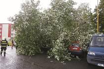 Ve Studentské ulici spadl strom na zaparkovaná auta.