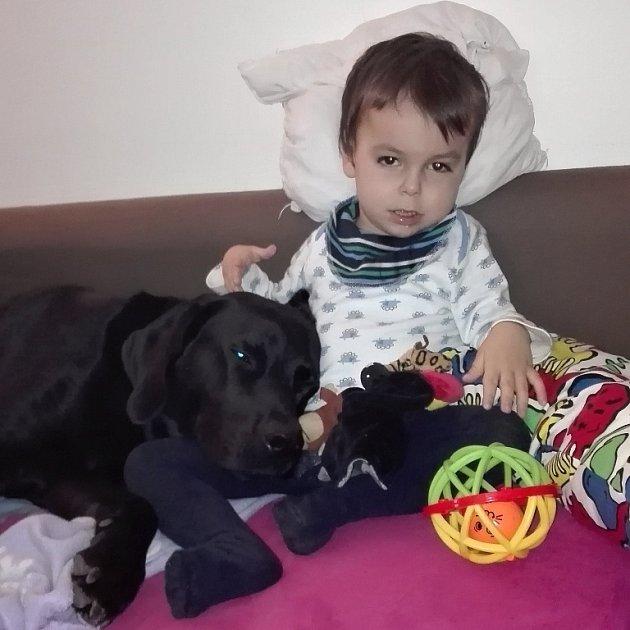 Čtyřletému Toníkovi, který trpí dětskou mozkovou obrnou a onemocněním plic, pomáhá canisterapie od jeho nového kamaráda Rockyho.
