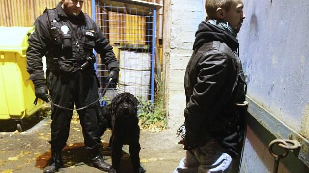 Služebního psa používají strážníci i v jiných městech, třeba v sousedním Litvínově.