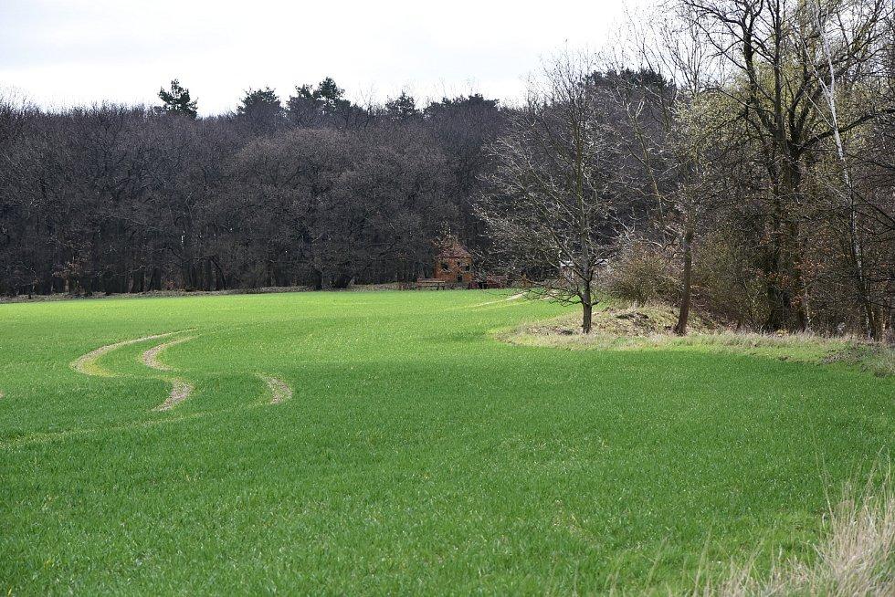 Hořenecký lesík.