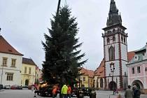 Cesta Vánočního stromu ze zahrady na náměstí.