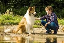 Jedním z filmů, který kina uvádí je snímek Lassie se vrací.