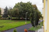 Šest stromů z této aleje v jirkovské ulici Pod Přivaděčem má jít k zemi