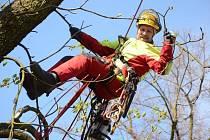 Technické služby v Chomutově začaly zaměstnávat stromolezce. Pavel Novák na snímku se dokáže dostat i do těch nejhůře dostupných míst, kde nejde použít žádná technika.