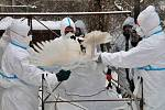 Ptačí chřipka. Ilustrační foto.