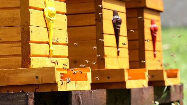 PĚT ÚLŮ skýtá útočiště pro přibližně sto tisíc včel.