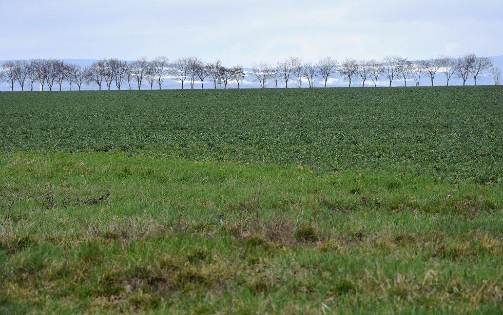 Na této zelené louce má vyrůst padesát rodinných domů. Jde o obecní pozemky.
