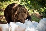 Medvědi v chomutovském zooparku si užívali sníh