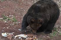 Probouzení medvědů v Podkrušnohorském zooparku.