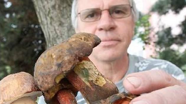 ROSTOU. Houbařům začala letošní sezóna o několik měsíců dříve. První hříbky nalezl v litvínovských lesích Pavel Pachl z Janova. Pokusil štěstí a vydal se po deštivém dni do lesa na sběr hub.