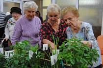Seniorky obdivují rozkvetlé bylinky.