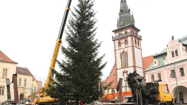 Dělníci na náměstí 1. Máje v Chomutově ořezávají spodní větve u vánočního strom a zasouvají ho do země.